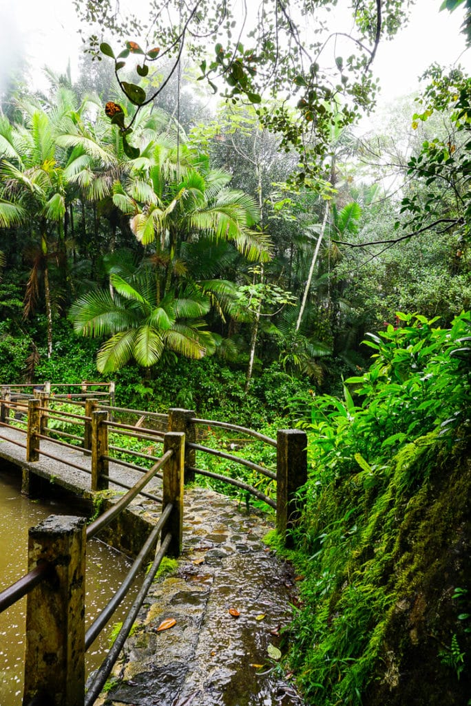 El Yunque Rainforest in Puerto Rico